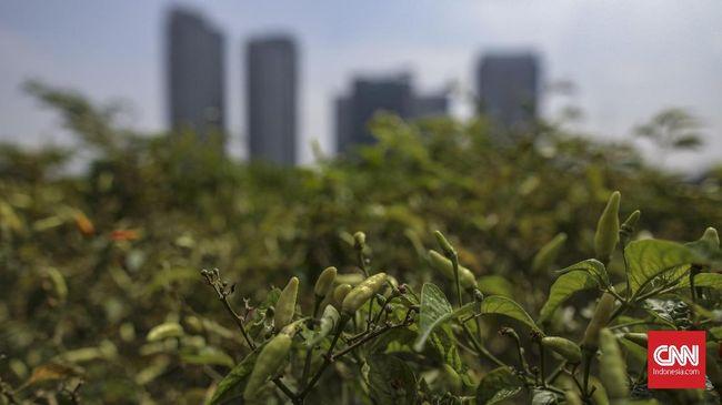 Berkebun di tengah perkotaan atau urban farming kian diminati oleh masyarakat modern, Jakarta, 15 November 2019.