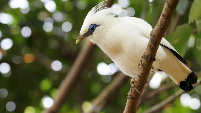 KLHK akan menjadikan Taman Nasional Bali Barat sebagia pilot project pengawasan hutan dengan menggunakan teknologi keceradasan buatan (AI).