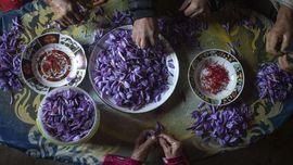 Saffron Jadi Bumbu Termahal, Berapa Harganya di Indonesia?