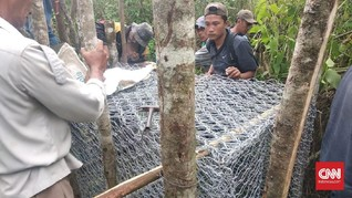 Marak Serangan Harimau, Pengusaha Villa Terancam Bangkrut