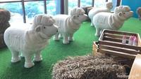 <p>Peternakan domba yang bakal diambil bulunya nanti akan diolah menjadi kain wool.</p>