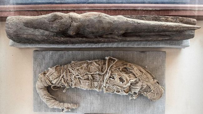 Para ahli yakin mumi wanita itu hamil ketika menemukan kaki kecil di perut saat pemindaian menggunakan laser.