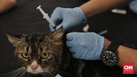 Vaksin Covid-19 Merah Putih Persiapan Uji Coba pada Hewan