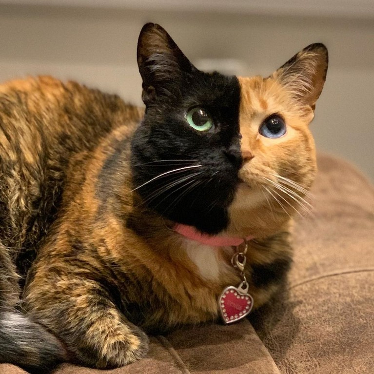 Venus, selebgram kucing yang memiliki dua warna di wajahnya juga mengucapkan rasa dukanya untuk Lil Bub. Dia mengungkapkan kenangan-kenangan saat mereka bersama di komentar unggahan Lil Bub.