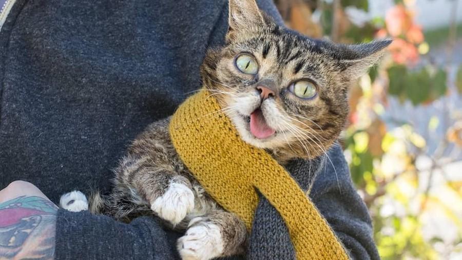 Perjalanan Hidup Lil Bub, Kucing Selebgram yang Mati saat Tidur