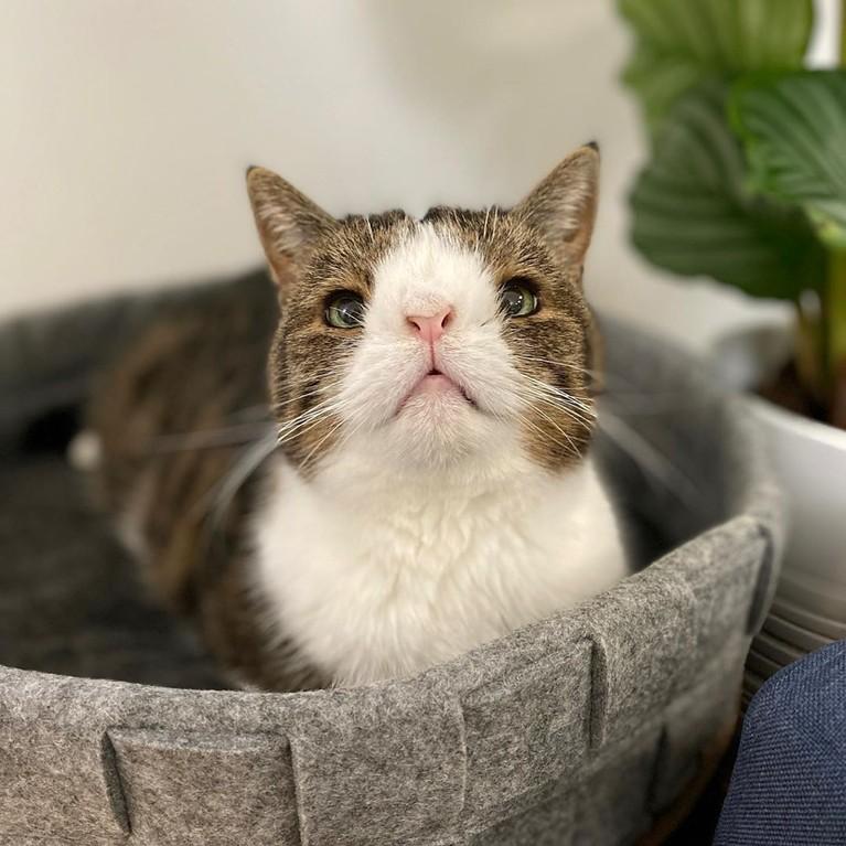Monty Cat, selebgram kucing lain yang juga turut bersedih saat mengetahui Lil Bub telah mati. Dia mengucapkan rasa terima kasih untuk Lil Bub karena telah menginspirasi banyak orang.