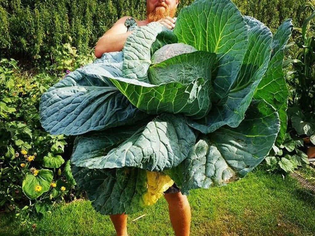Wow! 10 Buah dan Sayur Berukuran Jumbo Ini Bikin Takjub
