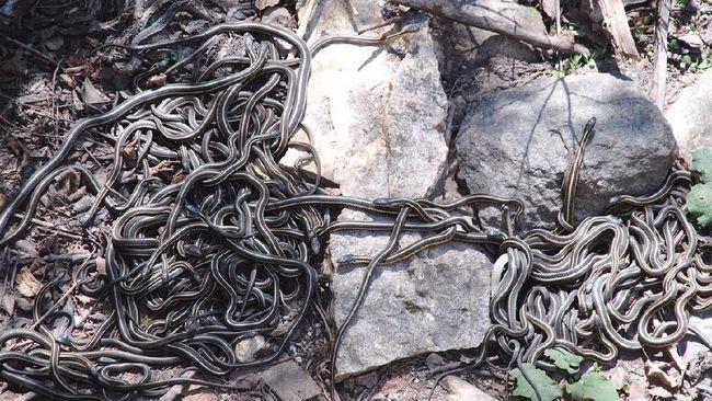 Jika Anda termasuk ophidiophobia atau orang yang memiliki fobia terhadap ular, sebaiknya tidak datang ke sejumlah tempat ini.