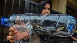 Tips Agar Ular Kobra Tak Bersarang di Rumah pada September