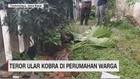 VIDEO: Teror Ular Kobra di Perumahan Warga