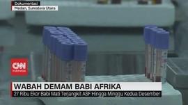 VIDEO: Wabah Demam Babi Afrika Serang Sumut