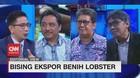 VIDEO: Bising Ekspor Bibit Lobster