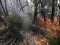 Mengenal Sistem Pemadam Kebakaran Hutan RI yang Tiru Kanada