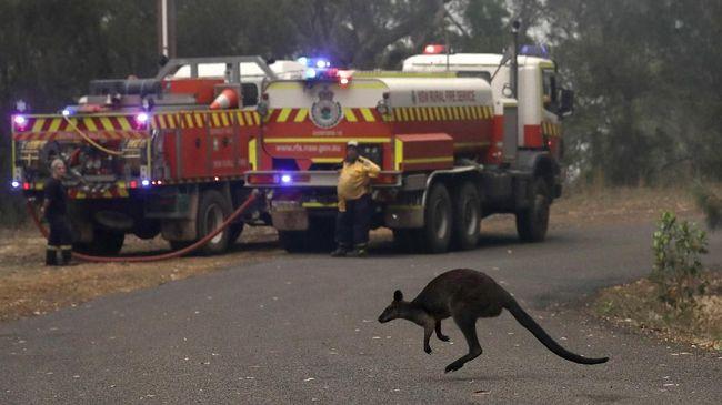 Kebakaran hutan yang terjadi di Queensland, Australia telah menghancurkan 40 persen Pualu Fraser, salah satu situs warisan dunia UNESCO.