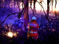 Korban Kebakaran Hutan Australia Jadi 28 Orang