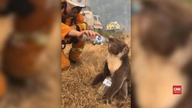 VIDEO: Pemadam Kebakaran Beri Minum Koala yang Kehausan