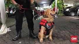 Axl, Anjing Polisi Pengawal Natal di Katedral Jakarta