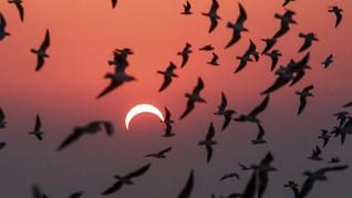 Penyebab Munculnya Matahari dan Bulan Cincin Pelangi di RI
