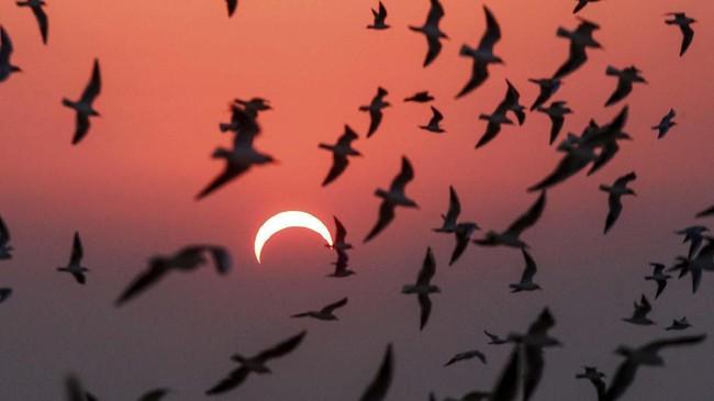 Indonesia dan beberapa negara di dunia menikmati peristiwa alam Gerhana Matahari Cincin yang berlangsung hari Kamis (26/12).
