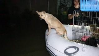 Banjir Jakarta dan Hewan-hewan Gemas yang 'Menangis'