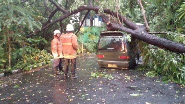 Warga diminta waspada potensi pohon tumbang akibat cuaca ekstrem yang landa Manado, Sulawesi Utara.