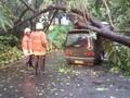 Cuaca Ekstrem Manado Picu Pohon Tumbang, Warga Mesti Waspada