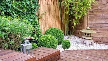 5 Tanaman Yang Cocok Menghiasi Taman Minimalis Di Rumah