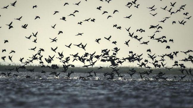 Terdapat sejumlah keanehan pada fenomena burung mati massal yang berjatuhan di langit Bali dan Cirebon beberapa waktu lalu.