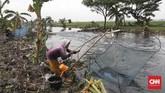 Warga memanfaatkan momentum meluapnya Kali Doser di Desa Wates, Kabupaten Bekasi, Provinsi Jawa Barat untuk menjala ikan betik.