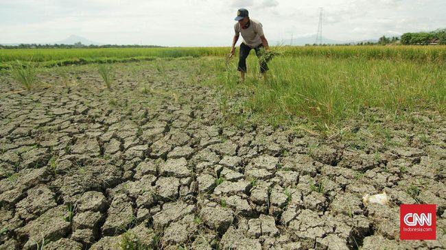 Kementerian ATR/BPN Asnawati mengatakan maraknya alih fungsi lahan sawah turut menjadi penyebab datangnya banjir.