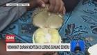 VIDEO: Menikmati Durian Mentega di Lereng Gunung Semeru