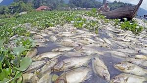 Laut Semakin Panas, 60 Persen Ikan Dunia Terancam Punah