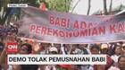 VIDEO: Demo Tolak Pemusnahan Babi