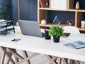 Studi Klaim Tanaman di Meja Kerja Ampuh Redakan Stres