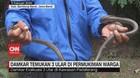 VIDEO: Damkar Temukan 3 Ular di Permukiman Warga
