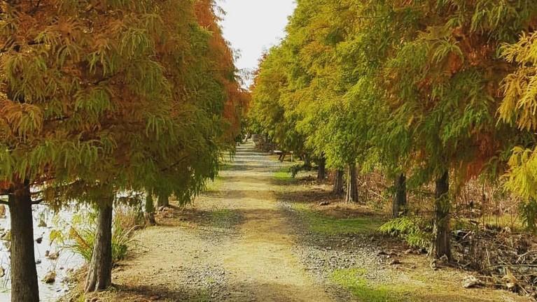Lokasi penuh dengan pepohonan ini menjadi tempatSon Ye Jin dan kaptenRi Jeong Hyuk bersepeda bersama pulang ke rumah. Lokasinya adalah di Cheongsan Arboretum, 70, Yeonkkot-gil, Nam-myeon, Taean-gun, Chungcheongnam-do.