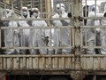 WHO Akan Umumkan Asal-usul Virus Corona di Wuhan China
