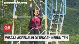 VIDEO: Wisata Adrenalin di Tengah Kebun Teh