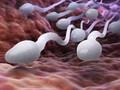 Penjelasan LIPI soal Virus Corona di Sperma Pasien Covid-19