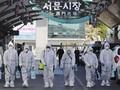 Korsel dan Jerman Jadi Contoh Sukses Atasi Pandemi Corona