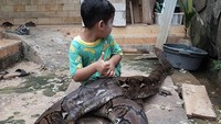 <p>Panji pernah bercerita lewat captionnya, anak bungsunya Auda sangat tertarik pada ular. Hampir tiap hari Aufa ke sawah dan berakhir dengan dikejar sang ibunda. (Foto: Instagram @panjipetualang_real)</p>