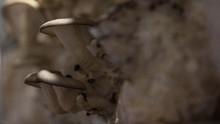 Jamur Pengubah Jangkrik Jadi Zombie Bisa Terjadi Pada Manusia
