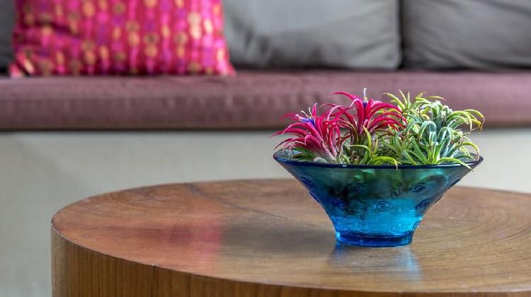 Tumbuhan Bromeliad untuk interior rumah