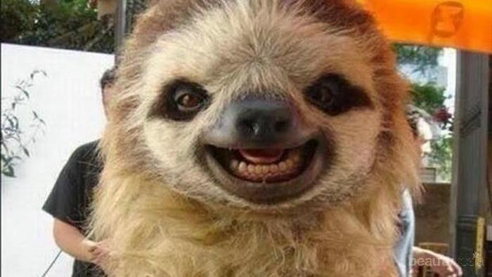 Lihat Tingkah Hewan-Hewan yang Hobi Selfie Ini! (Part 2)