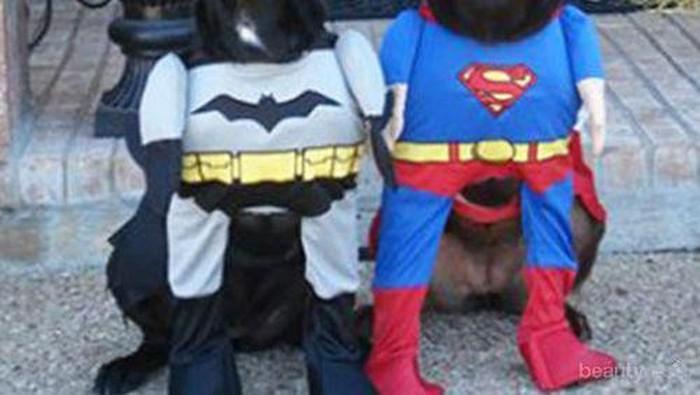 Anjing-Anjing Super Hero yang Akan Melindungi Hari-Harimu dari Kejenuhan