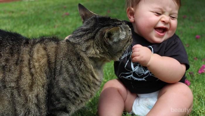 21 Video Lucu antara Kucing dan Bayi (Part 3)