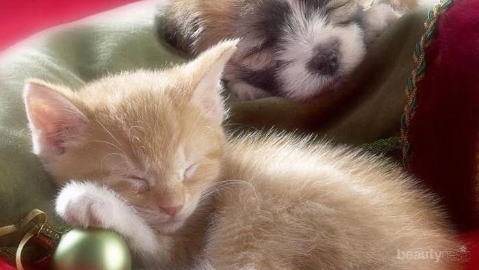 Cinta Kasih Anjing dan Kucing di Saat Tidur