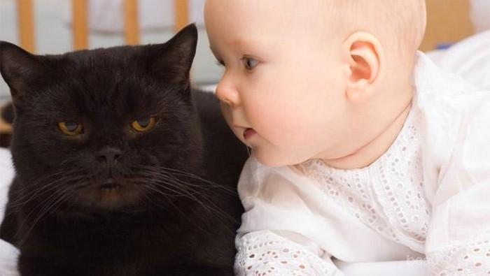 21 Video Lucu antara Kucing dan Bayi (Part 2)