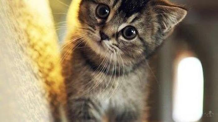 Mengapa Kucing Itu Lucu?