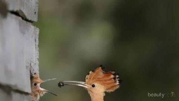 Perfect Timing! Kumpulan Foto Binatang yang Diambil di Saat yang Sempurna!